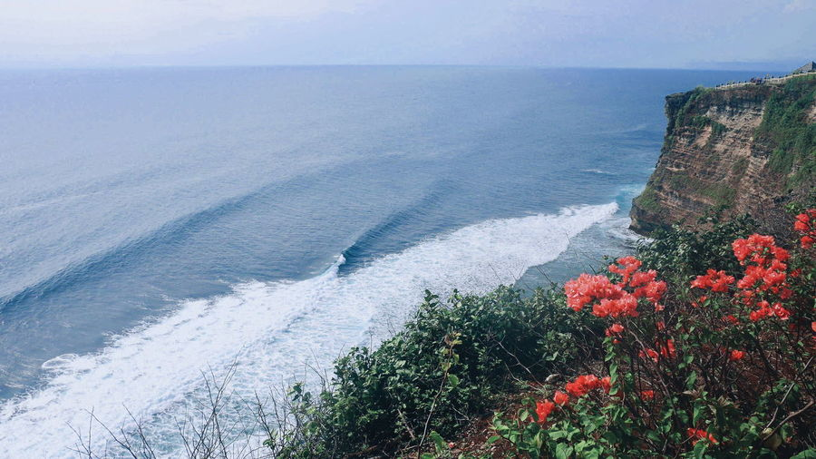 Bali, Indonesia Beautiful Bali Travel Happy Cool Like Sun Flower Water Sea Red Sky Horizon Over Water Poppy Wildflower Uncultivated Flora Bud Prickly Pear Cactus Dandelion Thistle Fragility Flower Head Dandelion Seed Blooming Daisy Pollen Petal Growing