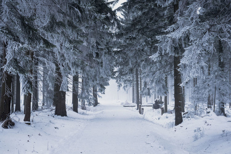 A journey Beauty In Nature Cold Temperature Day Fog Forest Growth Landscape Nature No People Outdoors Pine Tree Pine Woodland Scenics Snow Snowing Tranquility Tree Tree Trunk Winter Shades Of Winter