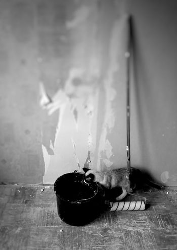 Curious Cat Indoors  No People Cat Kitten Painting Wallpaper Repair Room Bucket Pet Curiosity Curious Cat Bmwphotography BnwBnw_collection Monoart Bnw_life Bnw_shot Bnw_society Monochrome Blackandwhite Paint Roller Curious Catlife