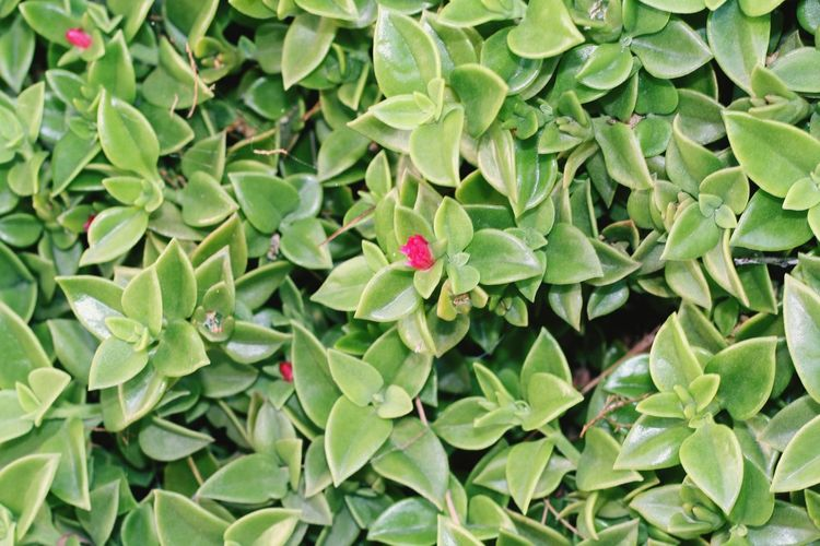 Leaf Outdoors No People Non Urban Scene Nature Beauty In Nature Wallpaper Succulent Plant Colorful Colors Photography Photo Photooftheday Greenery Green Travel Flower Leaf Flower Head Close-up Plant Animal Themes Green Color Flora Spring Botanical Cactus Young Plant