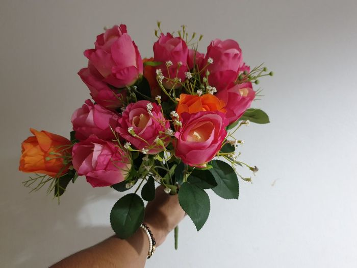 Close-up of hand holding pink rose against white background