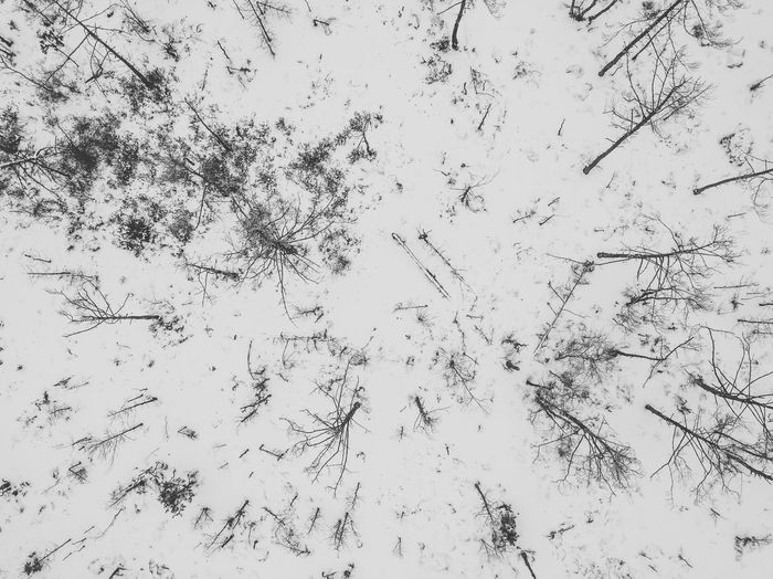 Snowy forest Drone  Aerial View Animal Themes Backgrounds Beauty In Nature Branch Close-up Cold Temperature Day Full Frame Growth Low Angle View Mavic Pro Nature No People Outdoors Sky Snow Snowy Forest Tree White