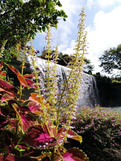 Yuan Dao Guan Yin Miao Yuan Dao Guan Yin Miao Flower Water Tree Spraying Motion Flowerbed Sky Plant