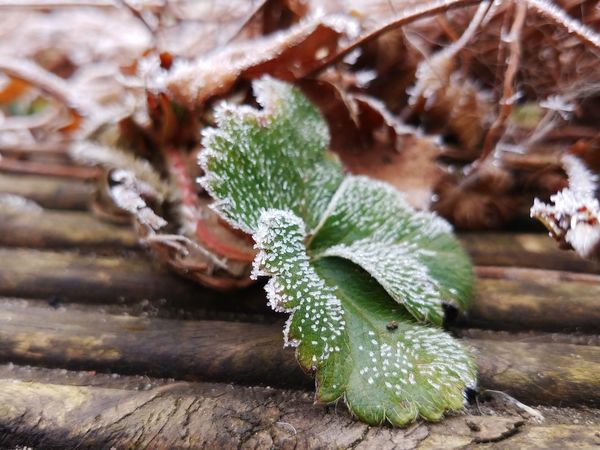 I am cold Whitefrost Nature Plant Green Color Growth No People Close-up Outdoors Beauty In Nature