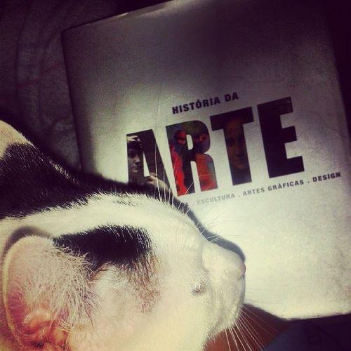 Cat Gato Goucha Arte art aveiro