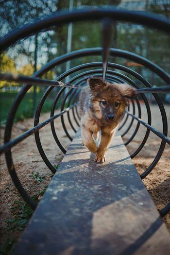 Portrait of dog seen through metal fence