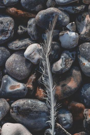 Rocks Solid No
