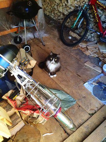Кот залез в дровенник!