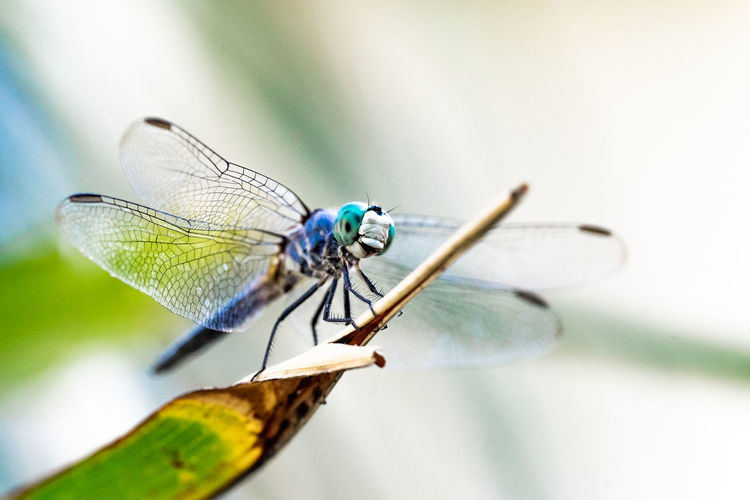 Close-up of dragonfly on a plant