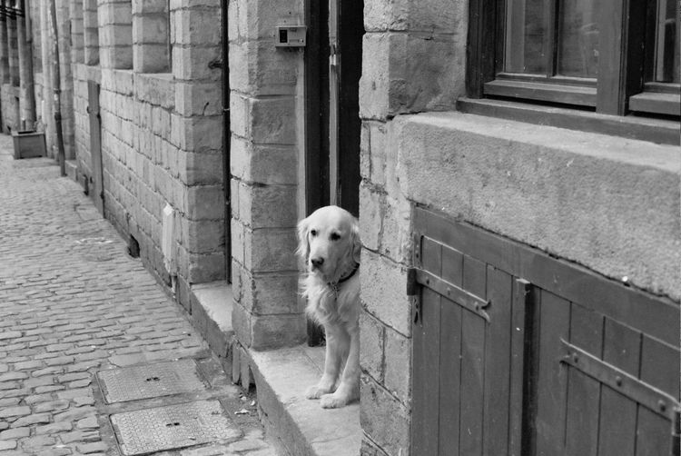 Canon AE-1 - Lomo Earl Grey 100 Animal Animal Themes Architecture Building Exterior Day Dog Domestic Animals Film Photography Filmcamera Filmisnotdead Footpath Mammal No People One Animal Outdoors Pets Standing Street Streetphotography Zoology