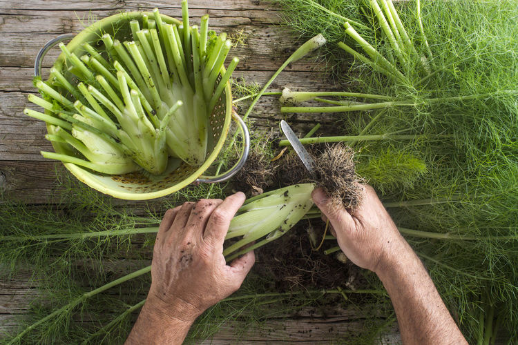 Close-up of hand cutting fennel