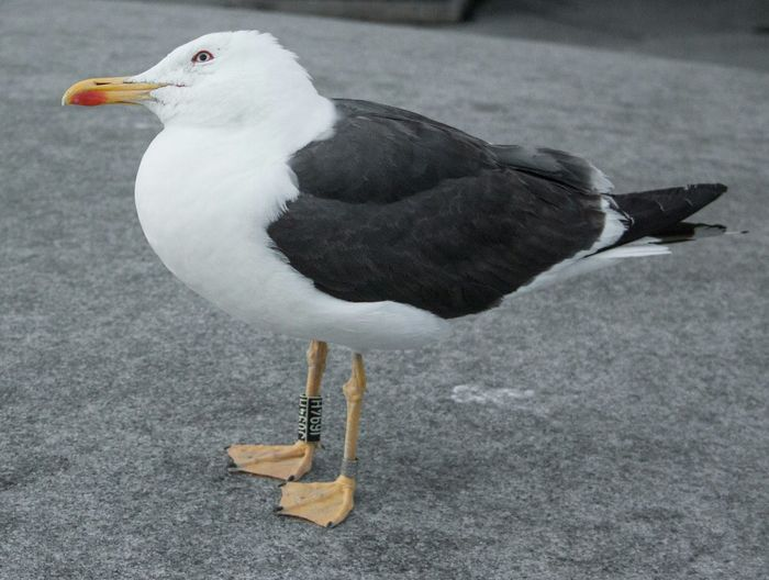 gull look at