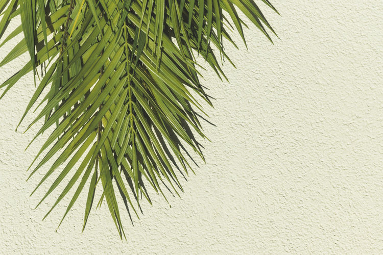 Close-up of palm tree against wall
