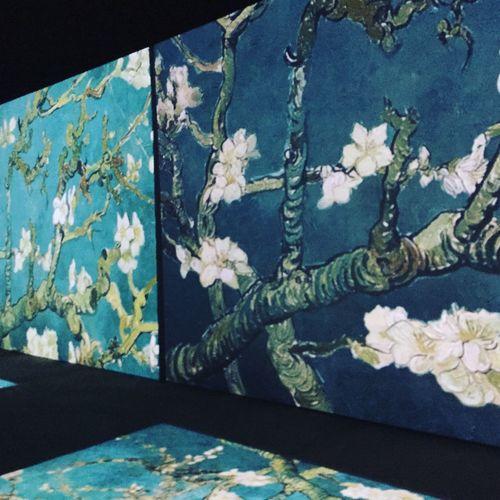 Flowering almond brunches🌸💙 Vangogh VinsentVanGogh Painting Almondtree FloweringAlmond Flowers Blue Brunches Minsk Belarus Amazing Loveit