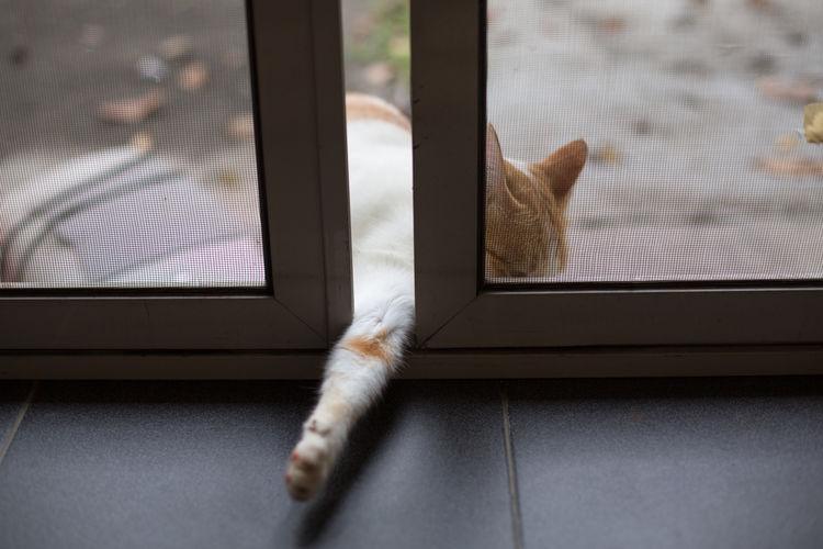 Cat Stuck Amidst Window