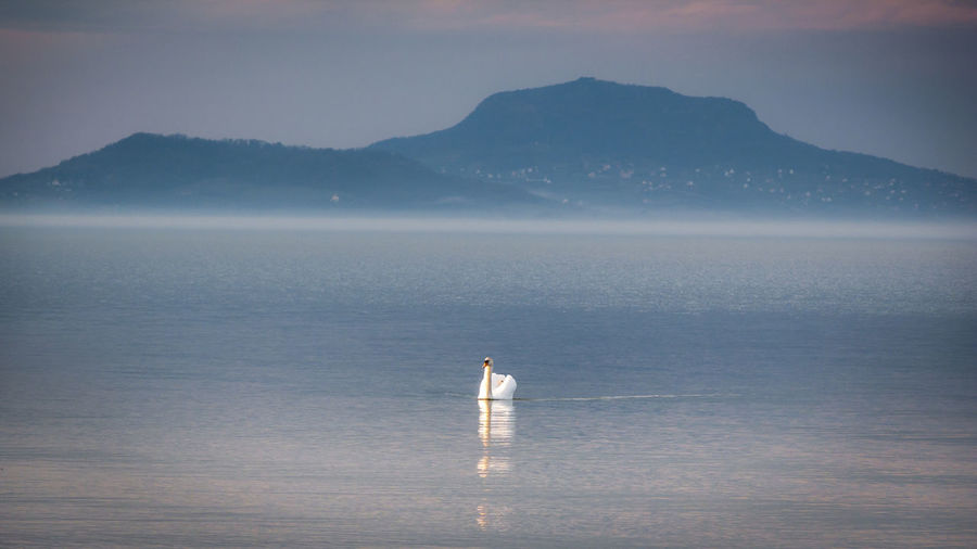 Lonely swan Beauty In Nature Betterlandscapes Swan Balaton Blue EyeEm Best Shots - Nature EyeEm Best Shots - Landscape EyeEm Best Shots - Landscape Landscape Betterlandscapes Full Length Lake Standing Mountain Solitude Sky Landscape Horizon Over Water Seascape Coast Coastline Sea