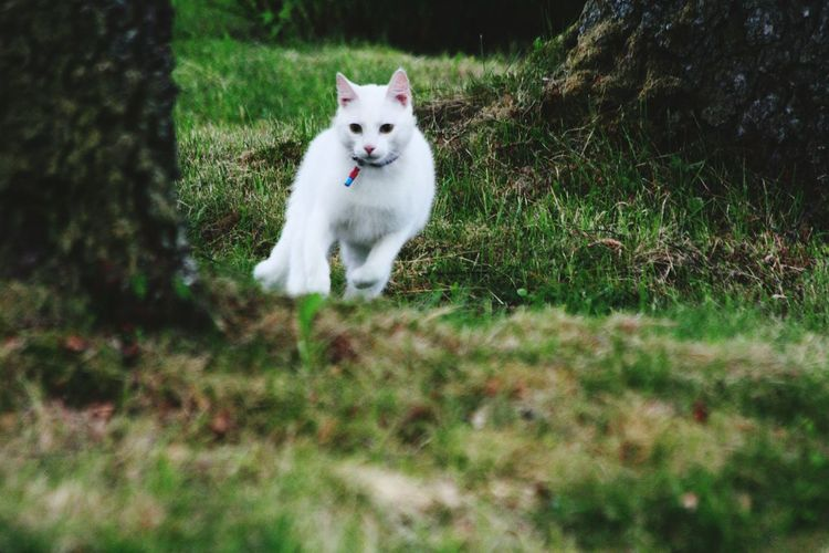 Cat Running In Forest