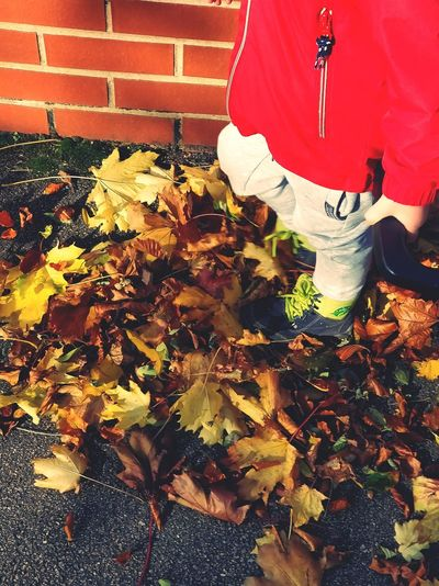 One Person Real People Red Outdoors Autumn Autumn Leaves Day Low Section People One Boy Only Chlidren Kicking Leaves Human Foot Shoe Personal Perspective Human Leg Footwear