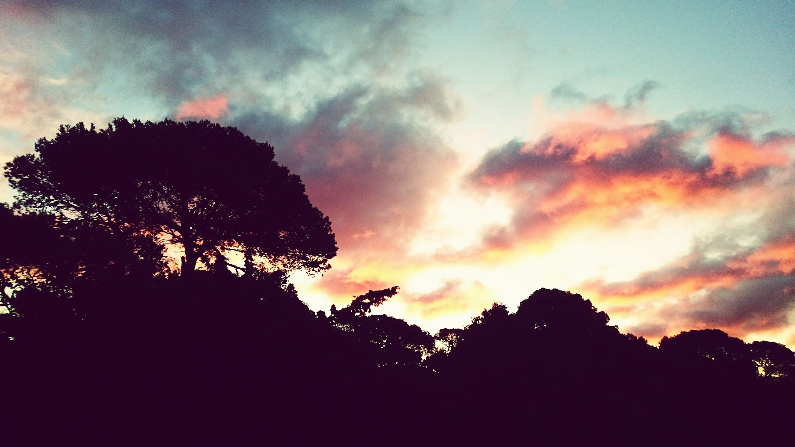 silhouette, sky, sunset, cloud - sky, tree, low angle view, beauty in nature, scenics, tranquility, tranquil scene, dramatic sky, cloudy, nature, orange color, cloud, idyllic, dusk, outdoors, no people, growth
