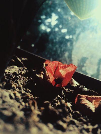 落红不是无情物。。。