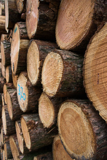 Abundance Backgrounds Close-up Day Deforestation Forestry Industry Full Frame Heap Large Group Of Objects Log Lumber Industry No People Stack Textured  Timber Wood - Material Woodpile Forest Photography Forestwalk Forestphotography Forest