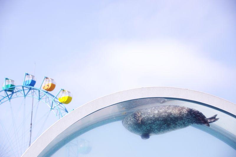 Happy Sea Merrygoround Sky_collection