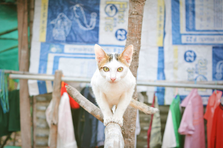 Built Structure Cat Day Domestic Domestic Animals Domestic Cat Feline Focus On Foreground Looking At Camera Mammal No People One Animal Outdoors Pets Portrait Vertebrate Whisker