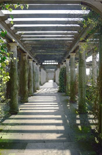 Looking along long stretch of Pergola Architecture Built Structure No People Direction Architectural Column Pergola Path Columns Columns And Pillars