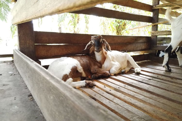 Dog resting on wood