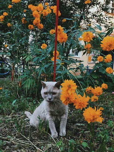 Plant Animal Themes No People Animal Pets Mammal One Animal