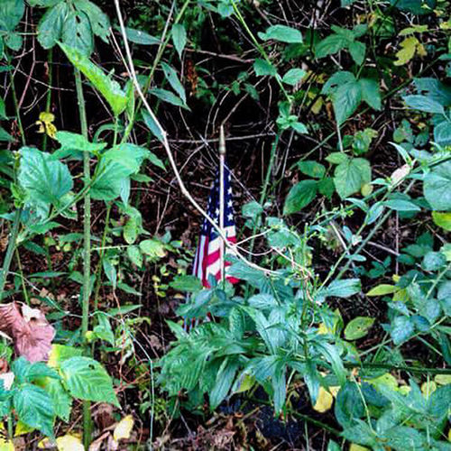 Growth Plant Leaf Patriotism Flag Tree Outdoors Nature Memorial Cemetery_shots Cemetery Quaker Cemetery Secluded