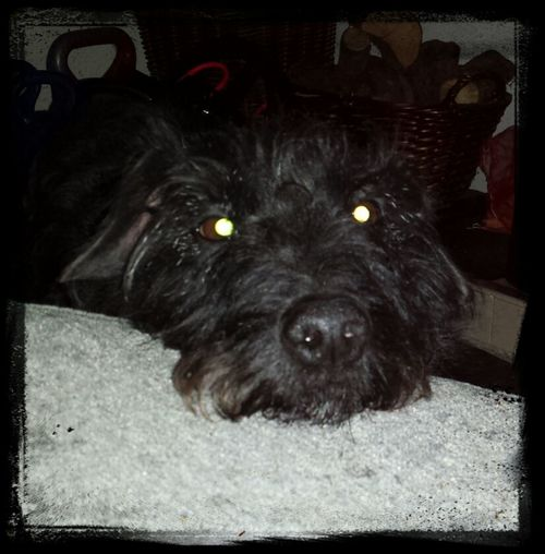 Devildog  Archie