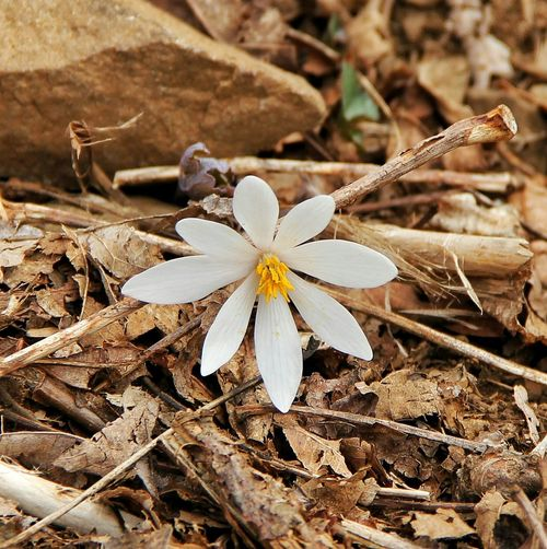 First Bloom in Shenandoah National Park First Blooms Of The Year EyeEm Best Shots - Flowers EyeEm Best Shots - Nature EyeEm Nature Lover Flower Collection Flowerporn Flower Power Flowers, Nature And Beauty Flower Photography Check This Out Taking Photos Nature Photography Nature_collection Natural Beauty Flower Collection Naturelovers Blooming
