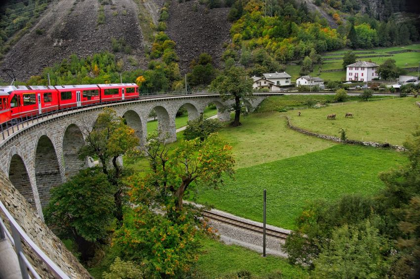 A marvelous trip on the Bernina Express from Tirano (Italy) to St Moritz (Switzerland) Bernina Express Train Bridge - Man Made Structure Connection Viaduct Architecture Arch Built Structure Transportation Tree High Angle View No People Nature Mountain Day Outdoors Scenics