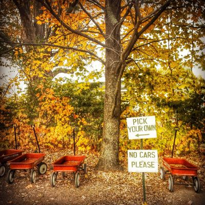 HipstaEdit EyeEmBestEdits Colors Of Autumn SignSignEverywhereASign