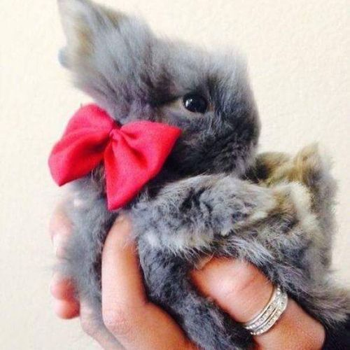 Hayvanlara ve cocuklara eziyet eden, sevmeyen insandan hic haz etmem ,mecbur kalmadikca diyologa dahi girmem ..oyle insanlar bana cok gaddar ,merhametsiz geliyor zira ben iki gruba da cildiriyorum resmen :) Tavşan Tavşi Hayvan Sevgi ask merhamet animal animallove rabbit rabbitlove cuttie