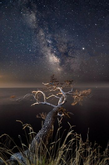 Bare tree against star field at night