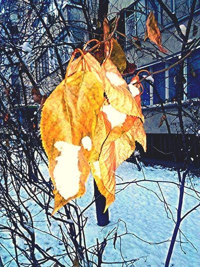 Eyemnaturelover Eye4photography  Snow Hugging A Tree