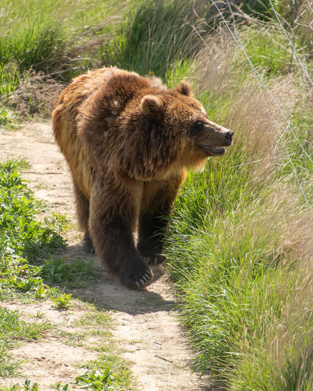 Animal Animal Themes Animal Wildlife Bear Mammal Nature One Animal Outdoors