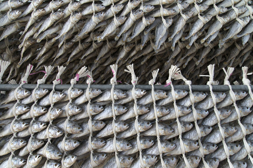 drying croaker, yellow corbina at Byeopseongpo in Yeonggwang, Jeonnam, South Korea Abundance Animal Themes Arrangement Bird Close-up Croaker Day Drying Croaker Drying Fish Drying Fishes Food No People Outdoors Place For Drying Fishes Sea Food Yellow Corbina