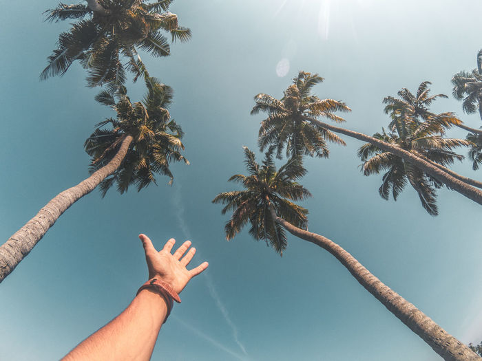 Low angle view of hand on palm tree against sky