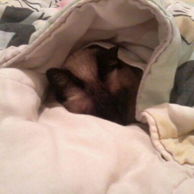 Instaursinho Durmindo com 2 cobertores pode isso...Instafrio Instagata instacat instafelino instalinda