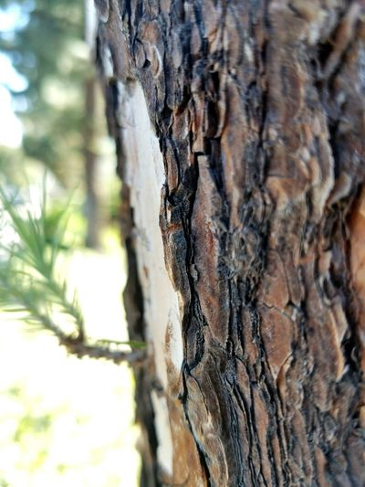 TakeoverContrast Extreme Close-up No People Branch Botany Natural Condition Textured  Brown Nature Day Scenics EyeEm Best Shots EyeEm Gallery Low Angle View Nature's Diversities Taking Photos EyeEm Nature LoverTree Trunk Tree Close-up Bark Rough Focus On Foreground Growth Selective Focus