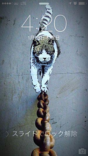 我輩は猫でR❤︎ 420 Cat Myphone Taking Photos Hi! Check This Out 710 FreeTime Relaxing Hello