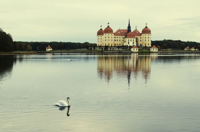 Bird Water Animal Afternoon Castle Lake Cloudy Day Reflex Monument White Swan Peaceful Waters Moritzburg Castle White Swan In Front Of Moritzburg Castle In Dresden