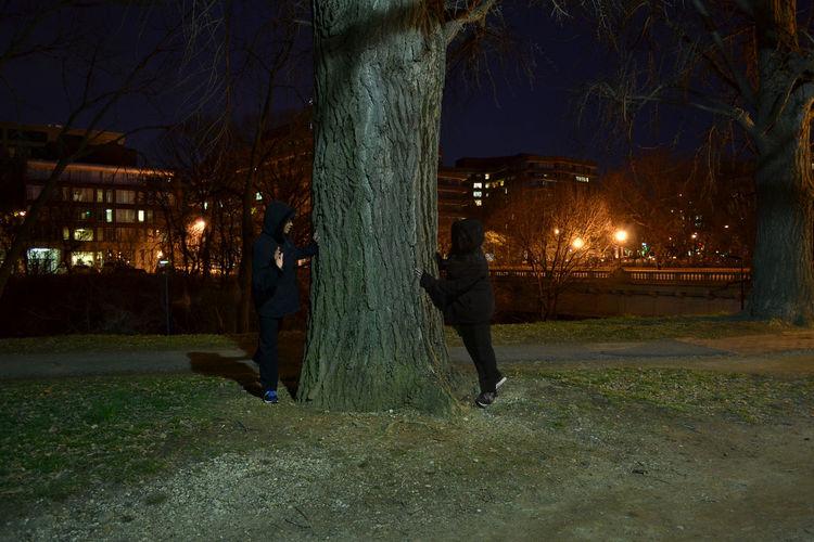 People on illuminated tree at night