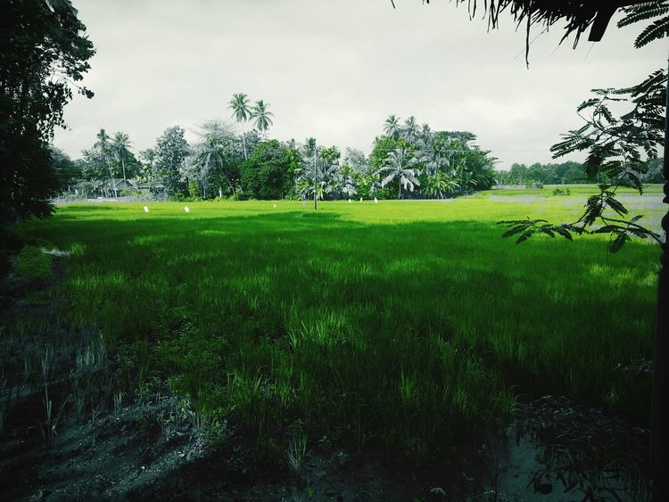 Greeny Environment!!!! On The Road Travelling