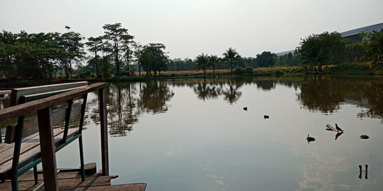 Bird Tree Water Lake Reflection Beauty Living Organism Sky Animal Themes Landscape