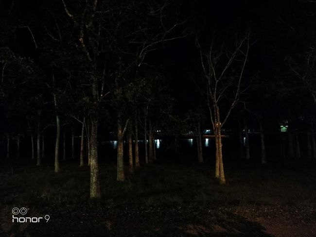Teste Honor 9 Tree Illuminated Spooky Neon Dark