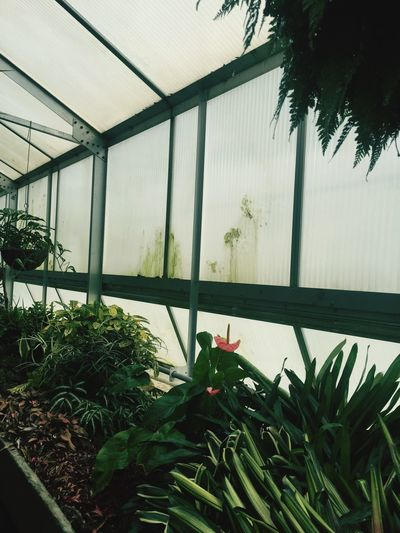 comfort Check This Out Hanging Out Hello World Taking Photos Relaxing Enjoying Life Plants And Flowers Plants Nature Looking Around Fun Day Iphonephotography Green Greenhouse In The Greenhouse